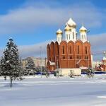 Сосна желтая. Дзержинск.