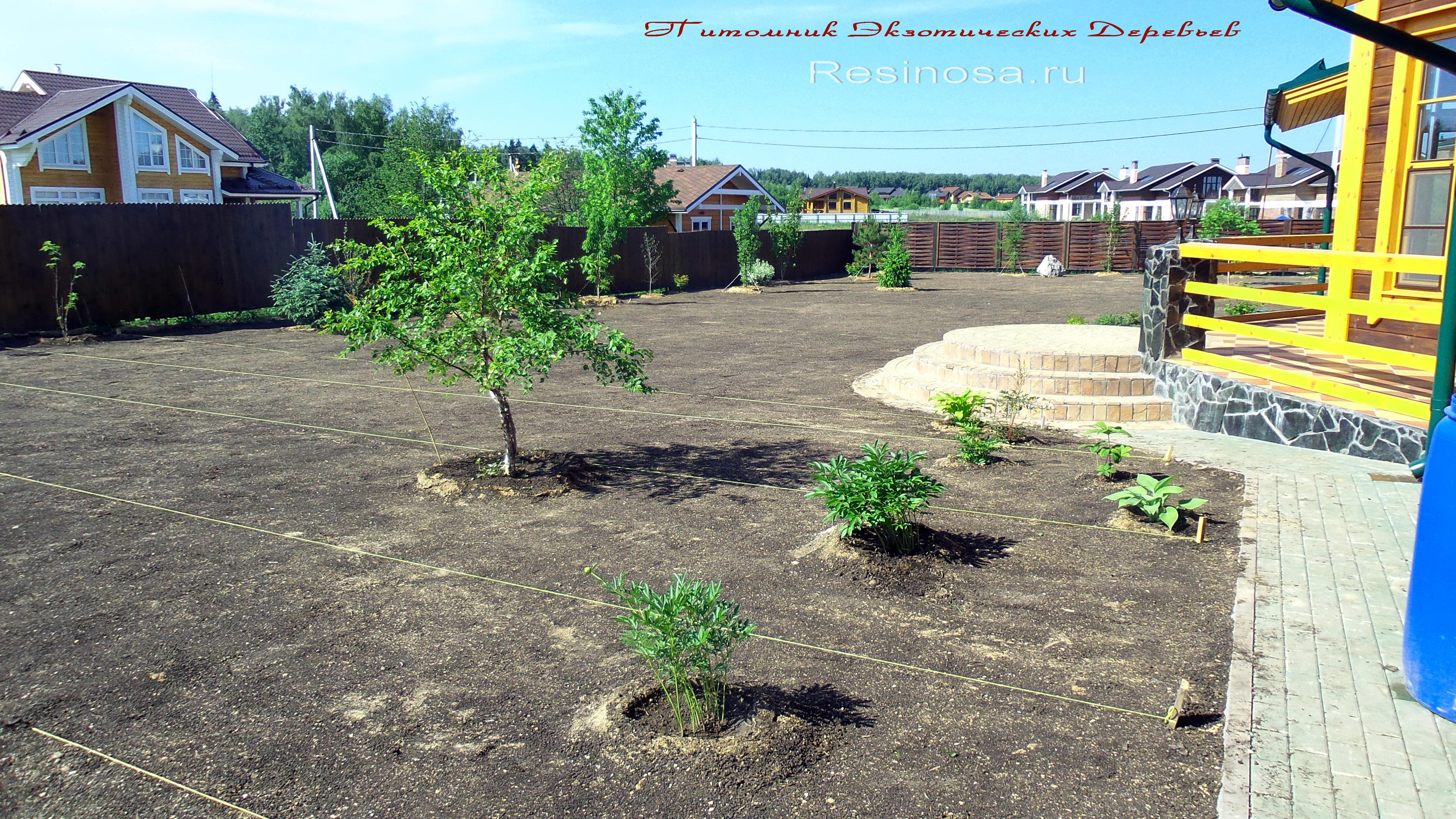 Выровненный и засеянный семенами газонных трав участок.