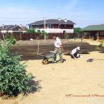 Работы по посеву газона. Слева на фото ель Энгельмана.