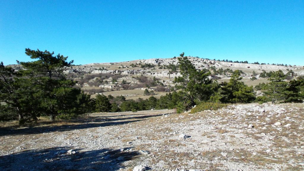На вершине холма ветры усиливаются, деревья становятся все более низкорослые.