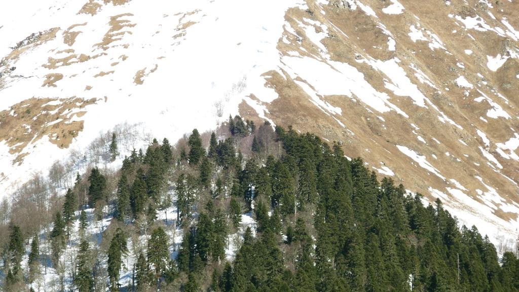 Верхняя граница распространения пихтового леса как правило не превышает отметки в 2000-2200 м.